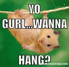 HAPPENS ALL THE TIME. Pissed hamster. Hamster Memes