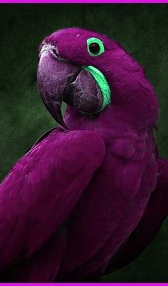What a beautiful macaw!