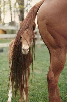 A baby horse is called a foal, with gender-specific names being colt for a male and filly for a female. Foals that are still nursing are sometimes called sucklings, and a weanlings after the nursing period ends.