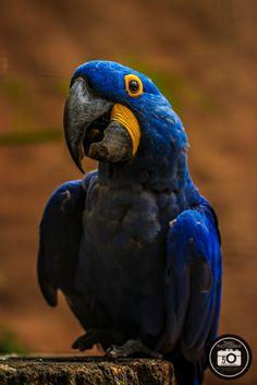 Bird Park in Foz do Iquazu Mit dem Makro-Obektiv im Vogelkäfig