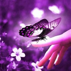 Fibro Friend Purple Things Stuff Butterfly Images Art Kisses