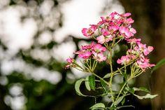 Claes`s Photo blog: floralmacro