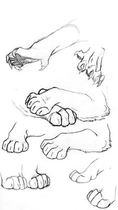 How to draw a cat nose 37 Ideas how to draw a wolf - Drawing Tips Animal Sketches, Art Drawings Sketches, Animal Drawings, Wolf Drawings, Drawing Animals, Realistic Drawings, Pencil Drawings, Art Reference Poses, Drawing Reference