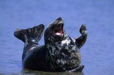 【画像】幸せそうに笑いすぎ!ニッコリ笑顔の動物たちの写真18枚:小太郎ぶろぐ
