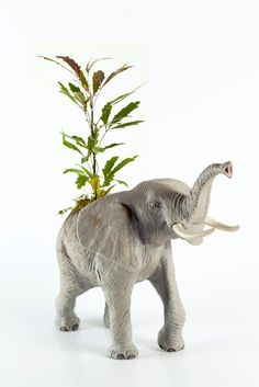 The Elephant in the Room // Twig Terreriums