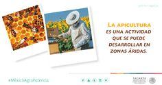 La apicultura es una actividad que se puede desarrollar en zonas áridas. SAGARPA SAGARPAMX #MéxicoAgroPotencia