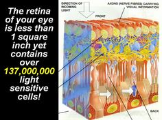 Complexity of the Eye