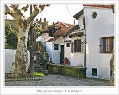 Título: Placilla con fuente  (Foto: Tomás Galindo) Puerto Viejo