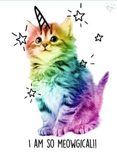 New wallpaper cute cat gatos Ideas Animals And Pets, Baby Animals, Funny Animals, Cute Animals, Exotic Animals, Unicorn Cat, Cute Unicorn, Unicorn Puns, Real Unicorn