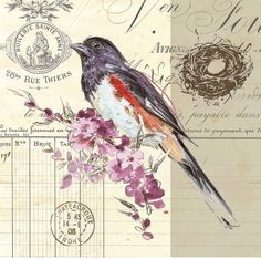 could  be a great tattoo... bird sketch cherry blossom