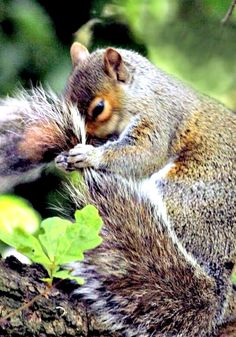 Apparently squirrels are obsessed with their tails