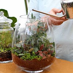 Terrariums make great gifts. Ann Whitman shows you how to create a colorful indoor garden in this step-by-step guide. http://www.gardeners.com/link-page?cid=7545