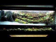 Mossy frog paludarium