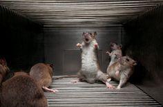 nat geo iraq 3d movie theatre picture - Google Search