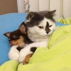 Cat Loves Dog http://ift.tt/2rmfaW9