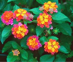 New New Home Garden Plant 20 Seeds Colorful Assorted by ZeepSeeds
