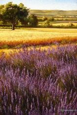 Caroline Zimmermann - Provence Paintings | Lavender and Sunflower Fields, Cote d'Azur