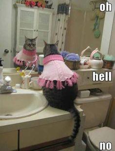 Bathroom Mirror Jokes mirror mirror | jokes | pinterest | daily jokes