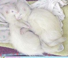 oh my glob cute albino babies!