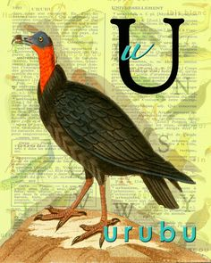 U for URUBU.Alphabet buzzard print Decor par BerniesArtPrints