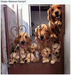 So many wet noses! So much cute! ❤️❤️❤️❤️