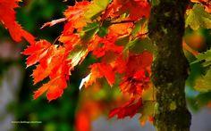 Szép különleges,fák virágok bokrok a 4 évszakban:) – Közösség – Google+