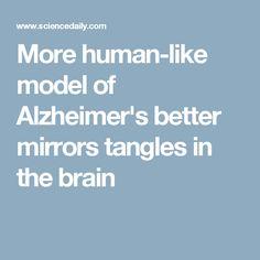 More human-like model of Alzheimer's better mirrors tangles in the brain