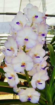 exotic flowers for delivery prime Rare Flowers, Flowers Nature, Exotic Flowers, Tropical Flowers, Amazing Flowers, Beautiful Flowers, Orchids Garden, Orchid Plants, Exotic Plants