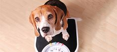 Worried about your dog's weight? Contact your vet for advice and support
