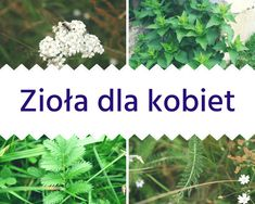 Zioła dla kobiet - na piękny wygląd, PMS | Naturalnie Niebanalnie Natural Remedies, Life Hacks, Food And Drink, Herbs, Healthy, Garden, Nature, Plants, Allergies