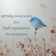 serenity comes when you trade expectations for acceptance - Google-søk
