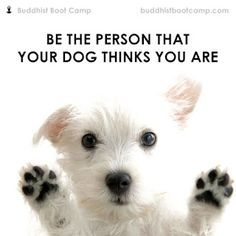"""""""Be the person that your dog thinks you are!"""" from Buddhist Boot Camp by Timber Hawkeye"""