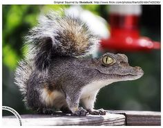 Photoshop heaven:  This is a Squirrelodile, of course.  From Martin /  Human Descent on Flickr.com!