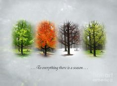 """""""To everything there is a season, and a time to every purpose under heaven."""