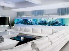 aquarium design - Google Search