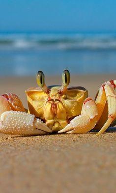 Crustacea - Classe Malacostraca, Subclasse Eumalacostraca (Ordem Decapoda)