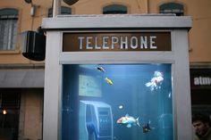 Cabine telefônica vira aquário na França