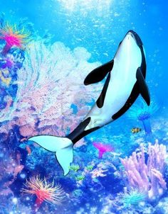 a powerful killer whale swims through the sea - a wonderful underwater scene with all its marine life