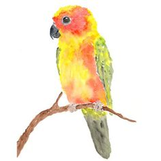 Watercolor bird painting, parrot bird art, animal illustration, tropical, sun conure, bird print, colorful art, 8X10 print