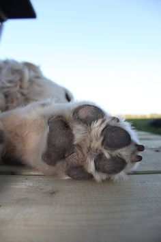 Itchy, sore, or red dog paws can be a symptom of allergies. Dog paws that are itchy, red, or sore are usually related to allergies and excessive licking. Learn how to help soothe them. Dog Paw Pads, Pet Paws, Itchy Dog, Dog Care Tips, Dog Behavior, Dog Owners, Dogs, Poster, Natural Remedies