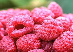 Home Grown Raspberry Patch--great ideas even for improving my current patch