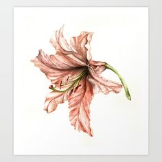 Buy Pink Lily Flower Watercolor Art Print by evgeniya. Worldwide shipping available at Society6.com. Just one of millions of high quality products available.