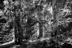 Marina Magro: The woods