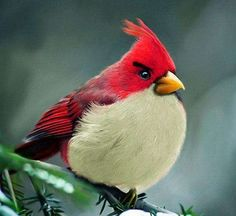 In this article we have posted Natural Angry Birds. These Birds are real life Angry Birds. Hit jump to check more Angry Birds. Angry Birds, Birds 2, Love Birds, Angry Angry, Pretty Birds, Beautiful Birds, Animals Beautiful, Beautiful Pictures, Animals And Pets