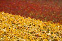 foglie e i colori pazzeschi autunnali