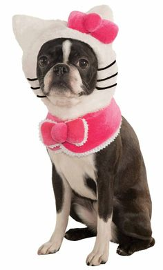 Hello Kitty Pet Costume lmfao violet would look adorable in this!!! If only they had one that would fit her!