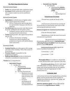 The Male Reproductive System o Seminiferous Tubules  Sertolli Cells… Body Anatomy Organs, Human Body Anatomy, Human Anatomy And Physiology, Nursing Board, Nursing Tips, Galen College Of Nursing, Nursing Physical Assessment, Nursing School Notes, Biology Lessons