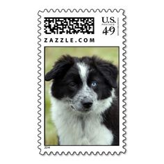 =>quality product          	Border Collie puppy dog postage stamp           	Border Collie puppy dog postage stamp We have the best promotion for you and if you are interested in the related item or need more information reviews from the x customer who are own of them before please follow the li...Cleck Hot Deals >>> http://www.zazzle.com/border_collie_puppy_dog_postage_stamp-172642416503454921?rf=238627982471231924&zbar=1&tc=terrest