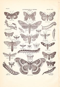moth old school - Pesquisa Google