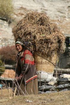 Harvest in Nepal